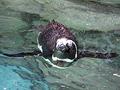 マリンピアのペンギン